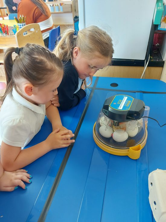 Children having a closer look at the eggs