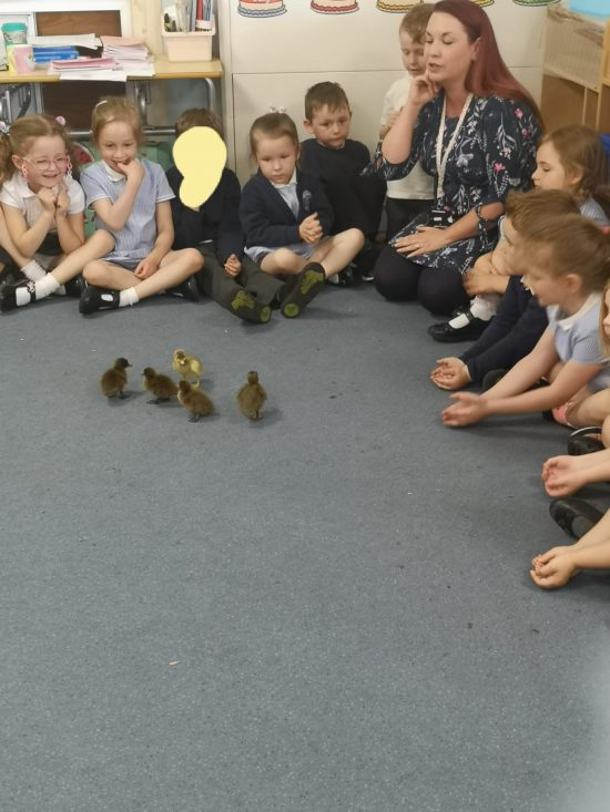 Reception children saying good bye to the ducklings