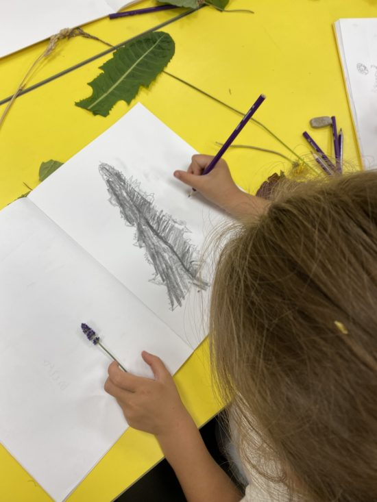 Year 1 children sketching their leaves