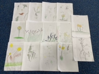 Examples of Year 6 childrens botanical artwork!