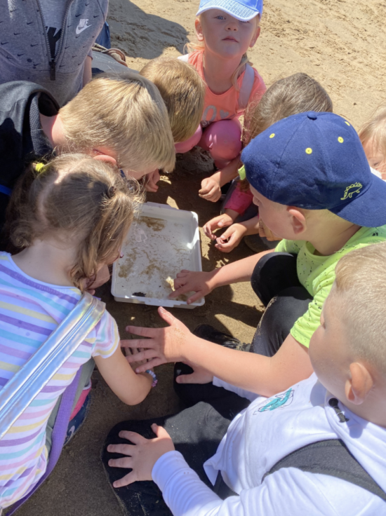 Year 1 and 1/2 rockpooling